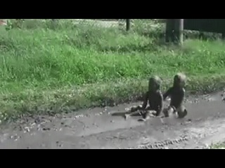 Иду вечером домой. Смотрю — в грязи играют дети. Присмотрелся — мои