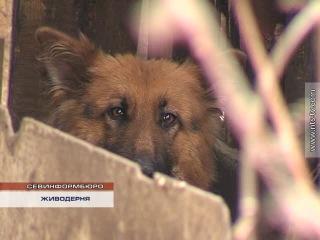 Живодер в Каче ел собак