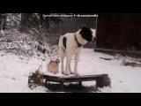 «Наш домашний зоопарк» под музыку Детские песни - Человек собаке друг. Picrolla