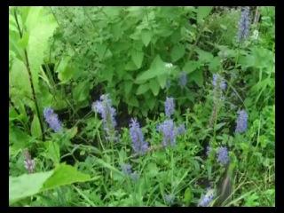 Сад и огород. Что с чем сажать, чтобы не мешало. Выступление Н.М.Жирмунской на телеканале «Загородная жизнь»