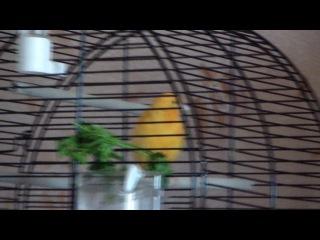 Жорик поёт Manowar - Expendable. :-)