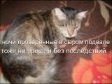 История кошки...Асе нужна помощь...Операция сделана...лечение продолжается..