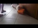 Кошки и коробки! Мега ржач!