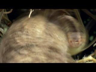 BBC: Africa / Африка (2013) 1 серия: Калахари / Kalahari