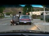 Рино 911 / Reno 911 (сезон 5) серия 08 (Rus) [HD 480]