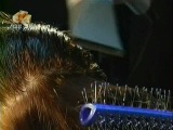 135 - Кто придумал велосипед? В чём разница между обычным шампунем и шампунем без слёз? Как дышат подлёдные хоккеисты?