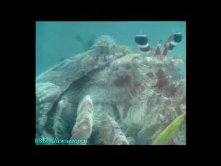 BBC «Живая планета. Портрет Земли (11) - Просторы океана» (Документальный, 1984)