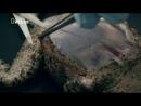 Взрывающиеся жабы - Секретные материалы природы / Wild Case Files (Nat Geo Wild)