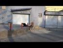 Cityride_Vlg2012_2