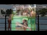 «С моей стены» под музыку Павел воля!! - НаШа Rusia страшная сила (РЭП ПРО РАСИЮ!). Picrolla