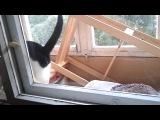 Как кот окно открывал