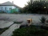 зоофил)))))