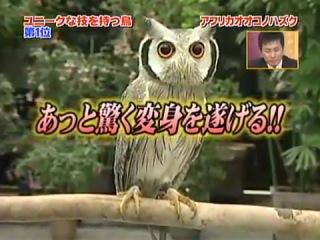 Японская сова - трансформер