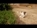 Котята срочно ищут дом