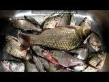 «мой улов» под музыку Ура!!!!! Песня про рыбу!!!))) - А я рыба, я рыба, я живу в окияне! И прибрежные воды здесь качают меня!Меня, короче, не парят никакие проблемы!Лишь сверкает на солнце моя чешуя! :))). Picrolla