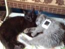 Мой кот Музрик и кошка Даша