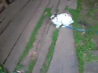 Кролик топает в ограде