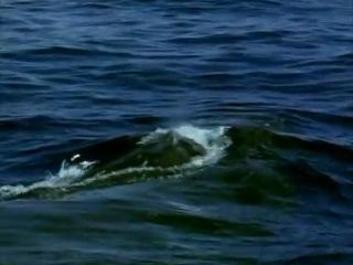 Эти загадочные киты (BBC, 1999)