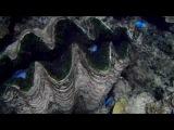 Great Barrier Reef (Lizard Island)