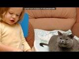 Смешные картинки про котов! под музыку Сергей Лазарев - Биение сердца (2011). Picrolla