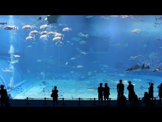 Kuroshio Sea - 2nd largest aquarium tank in the world HD