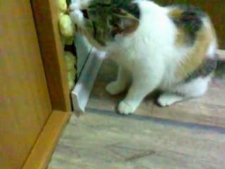 Прикол кошка жуёт монтажную пену