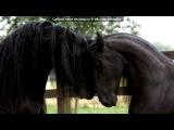 «Лошади ето самые красивые животные в мире!!!!» под музыку Enigma - Песня о хаски (из фильма белый плен). Picrolla