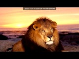 Со стены Животные под музыку Elton John Hans Zimmer Lebo M South African Chorus - He Lives In You (OST Lion King). Picrolla