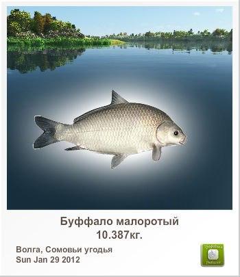 Виталий Наркевич |