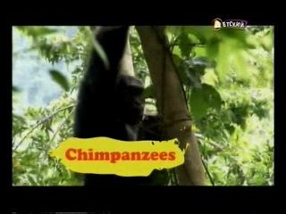 Бинди: девочка из джунглей / Bindi: The Jungle Girl (1 сезон, 25 серия из 26) Сколько им лет.