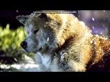 Kate Winslet - What If. хатико.марли и я.белый плен