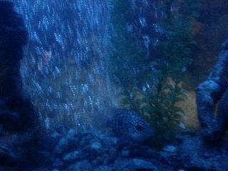 аквариум  на 200 литров  20.05.2012