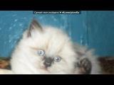 мои кошки под музыку Aggro Santos feat. Kimberly Wyatt - Candy(Step Up 3 - Шаг в перёд 3). Picrolla
