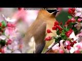 «цветы» под музыку великолепный век - турецкая скрипка - музыка души. Picrolla