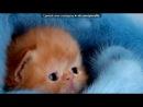«Котенята!» под музыку Аврил Лавин - Smile. Picrolla