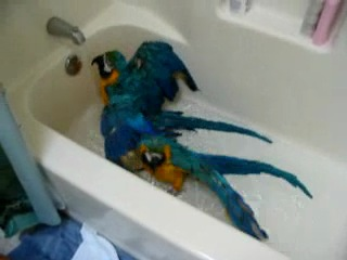 Рая и Рио купаются в ваной