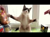 танец кота