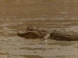 8 of 8 - / Жизнь животных - Плотоядные: Крокодил /The Wildlife Specials: Crocodile/ 2003