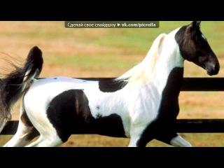 «лошади))))*****» под музыку Hande Yener  - Romeo(песня,котрую я никогда не забуду)))с ней у меня связано столько воспоминаний)))классная,энергичная турецкая мелодия). Picrolla