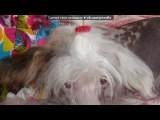 «Моя собака» под музыку Katy Perry  - You Pica. Picrolla