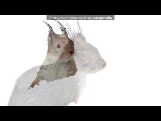 «Белка в снегу» под музыку Фабрика звезд 3 - С новым годом, папа, с новым годом, мама!!! . Picrolla