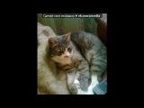 мурзик мой кот под музыку Nadir ft Shami -