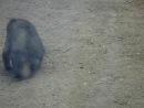 зоопарк новосибиск=угарная мартышка...прикольный мальчикмама не растеряласьГде какают мартышкиахахаххржусмех приколсмотреть всемаааааа
