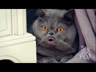 Поющий кот Сальвадор - 2 часть