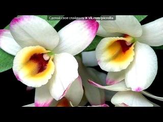 Видео маленький цветок саксофон