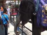 Прожорливый слоняра