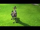 Мадагаскар 3 (Madagascar 3: Europe's Most Wanted): дублированный трейлер №3