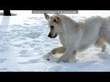 «Снег - наше всё!» под музыку Сергей и Татьяна Никитины - собачья песня (собака бывает кусачей). Picrolla