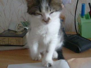 Котёнок засыпает) Мило) Няшно) *_* ^_^