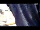 собачьи бои алабай vs питбуль